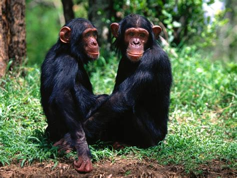 monkey and monkeys images monkeys hd wallpaper and background photos 14750646