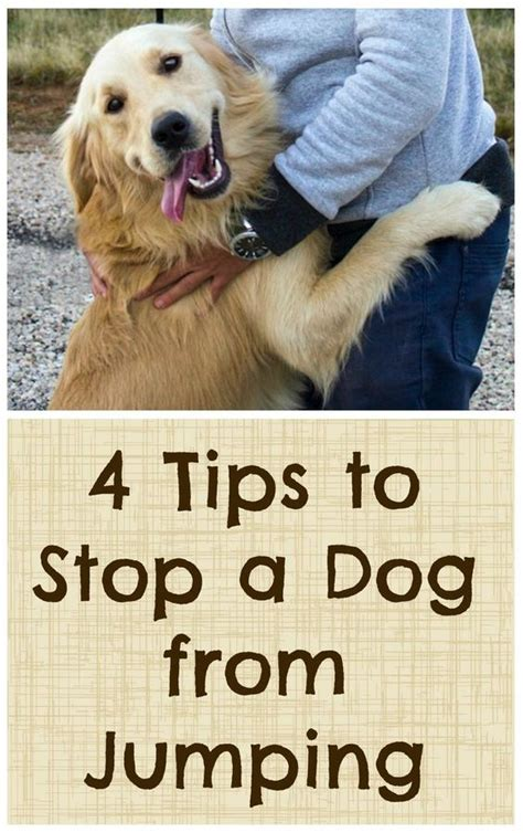 Stop Puppy Jumping On by 4 Tips To Stop A From Jumping Tips Dogs And The O Jays