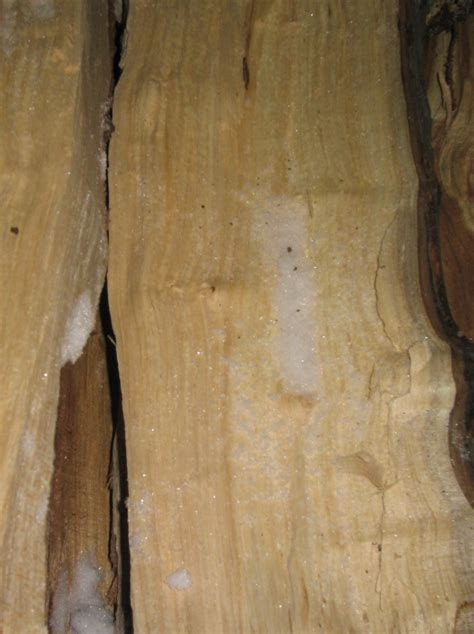 maple tree wood plants and sugar maple