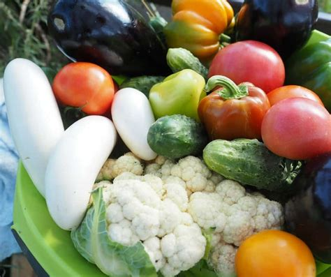 How To Preserve Fruits And Vegetables How To Freeze Garden Vegetables