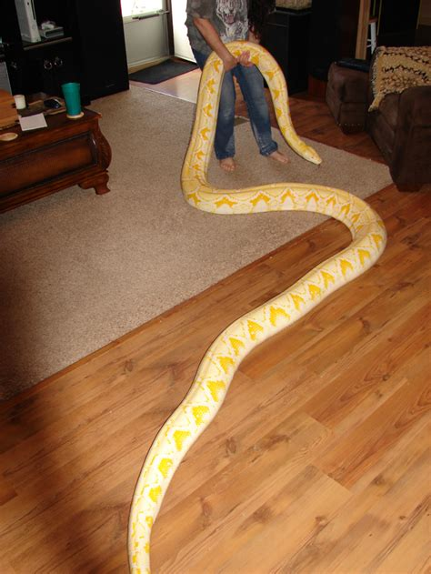 Really Big by Really Big Snake Toptenz Net
