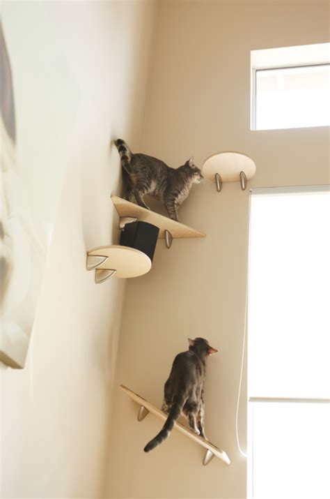 ikea cat shelves www imgkid the image kid has it