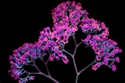 uvb light for plants a photographer captures plants invisible uv glow creators