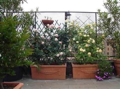 piante da terrazzo soleggiato ricanti da balcone piante appartamento