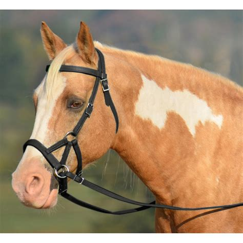 Horse Tack Giveaway - two horse tack sidepull bitless bridle made from leather