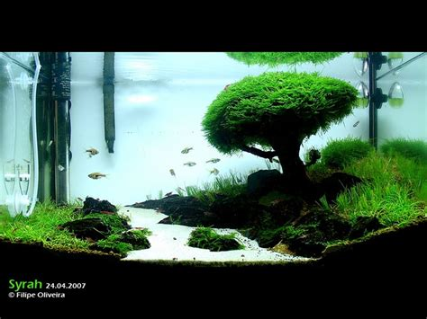 iwagumi aquascaping 4 fish