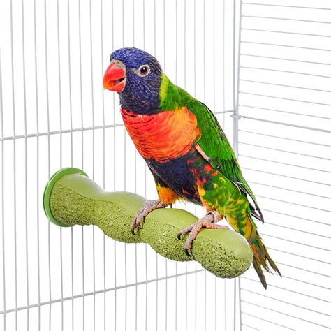 the bird perched on the swing how to choose a proper bird cage quiet corner