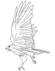 Red Tailed Hawk Coloring Page  Download Free sketch template