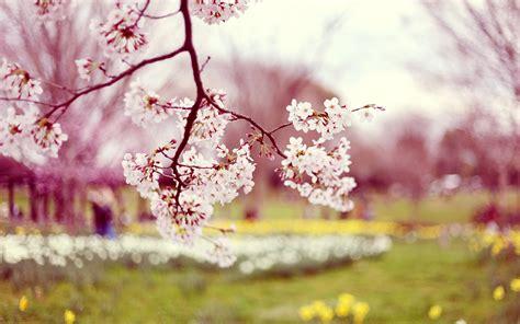 wallpaper tumblr spring flower tumblr wallpaper 1280x800 42455