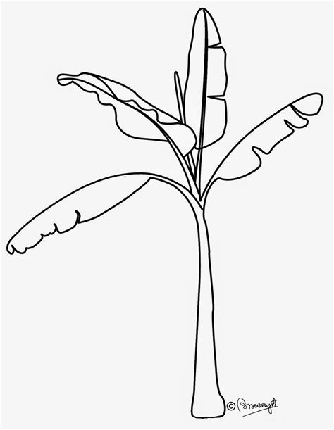 jungle bunch coloring pages banana jungle plants coloring page with beautiful