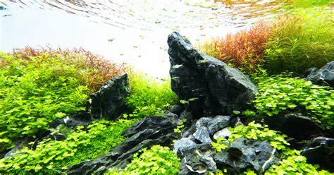 nature   glass aqua design amano