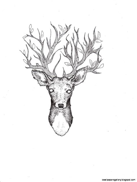 deer drawing wallpapers gallery