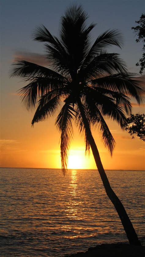Live Palm Tree Wallpaper by Palm Tree Iphone Wallpaper Iphone 5 Sunset Palm Tree