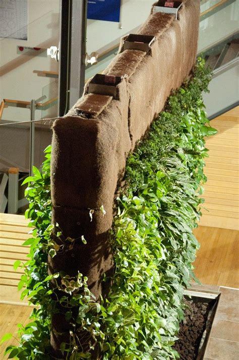 living wall garden creating  living wall  plants