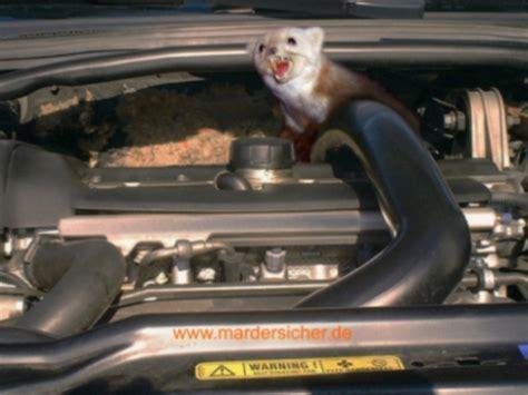 len im auto marder vom auto vertreiben