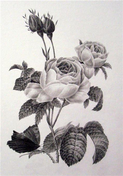 libro botanical drawing using graphite the art of botanical drawing elora centre for the arts