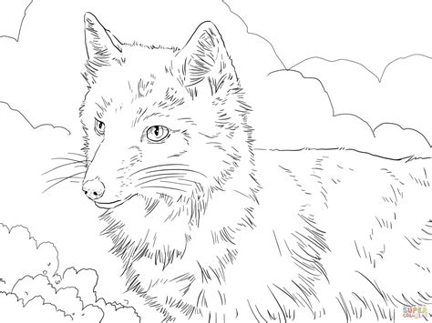 swift fox coloring page swift fox portrait coloring page free printable coloring
