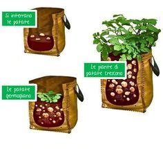 coltivare carote in vaso come coltivare le carote in vaso sul balcone verde