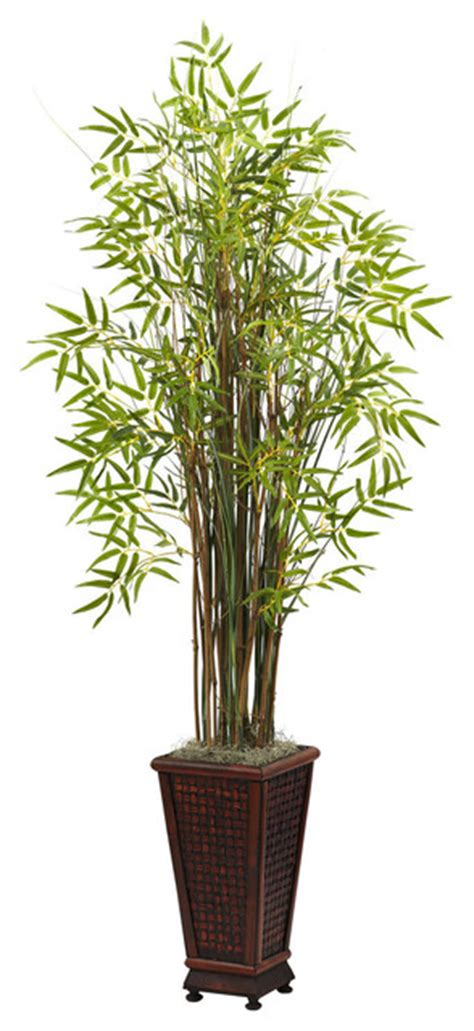 Decorative Indoor Planter by 5 50 Foot Grass Bamboo Plant With Decorative Planter