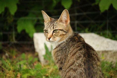gatos en casa cu 225 nto tarda un gato en volver a casa