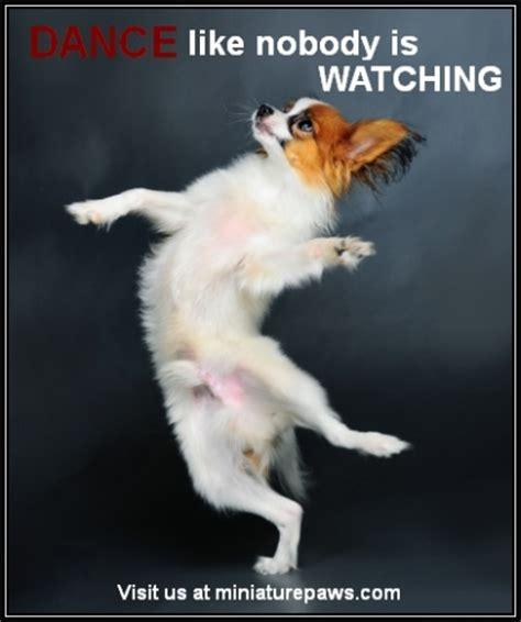 Dancing Dog Meme - dance like nobody is watching dog memes pinterest