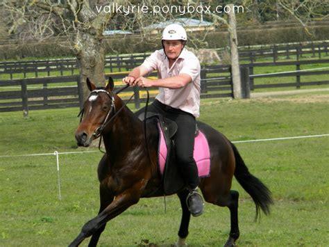 Giveaway Horses Qld - australian stock horse breed photos