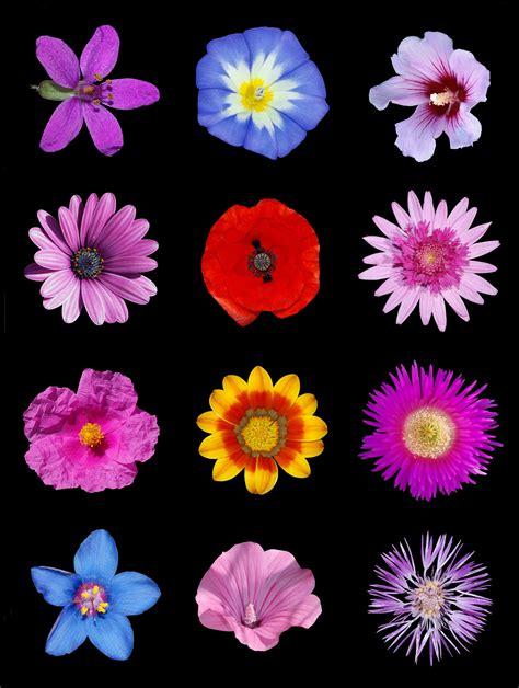 file colored flowers b jpg wikimedia commons