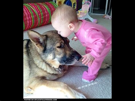cute dogs and adorable babies compilation youtube best funny animals compilation cute dogs love babies