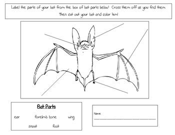 labelled diagram of a bat bat diagram to label by marinucci teachers pay teachers