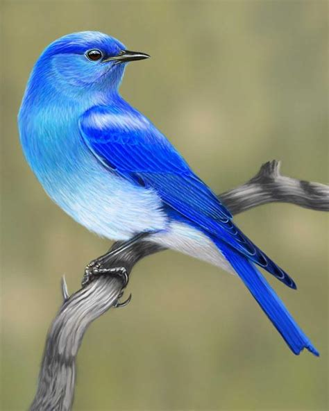mountain bluebird portrait whatbird com