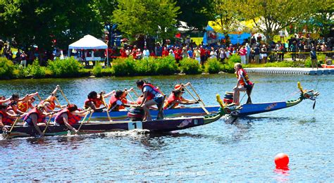 dragon boat festival line up boston dragon boat festival and races chinese culture event