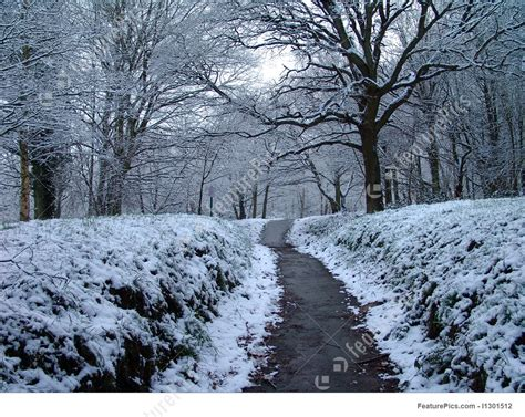 Snowy Path Through Forest Picture Free Clip Art Christmas Words