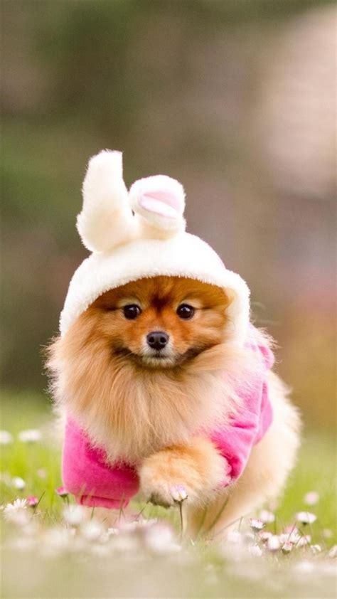cute puppy dog wallpapers download cute puppy id01 galaxy note 3 wallpapers hd note