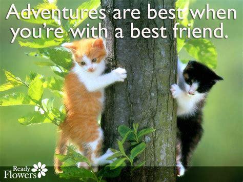 best friend pet puppy best friend quotes search quotes