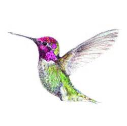 hummingbird drawing 17 best ideas about hummingbird drawing on how