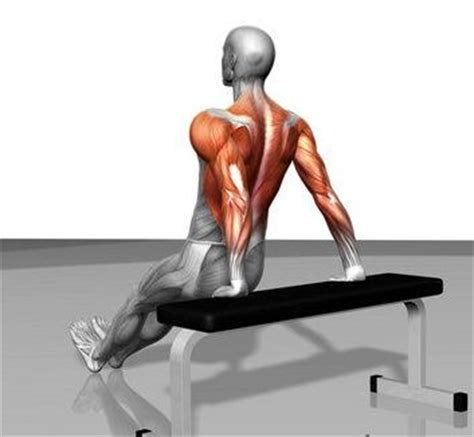 what does benching work tricep dips muscles worked body beautiful let s lift