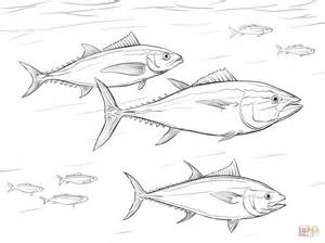 pacific bluefin tuna shoal coloring page free printable