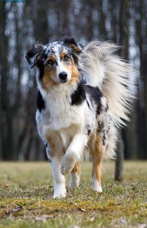 amazing dogs amazing pictures of dogs www pixshark images galleries with a bite