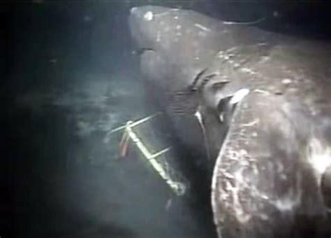 "Existe el tiburon ""megalodon""?   Taringa!"