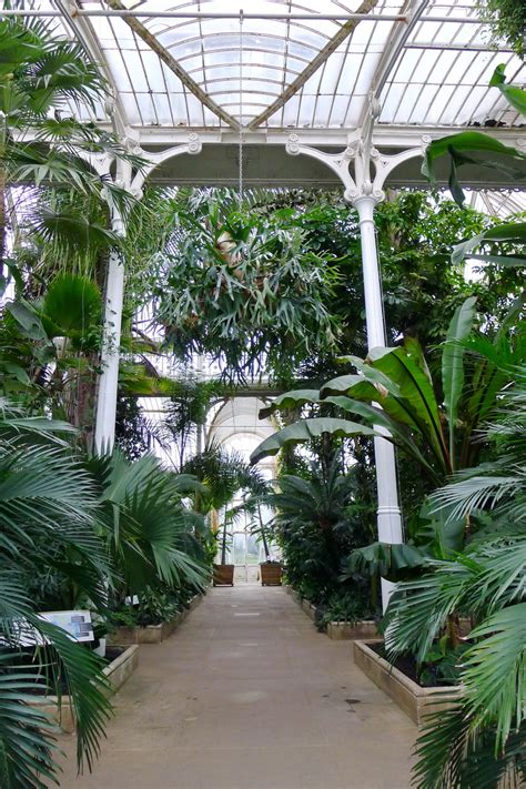 house palm palm house at kew gardens photo credit browne