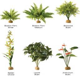 Tropical Rainforest Plant Facts - tropical rainforest plants list tropical rainforest