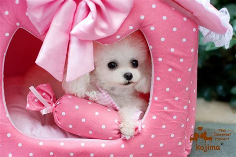 Puppy Pet Bed House L Pink 2 size m l princess pet bed pet house house