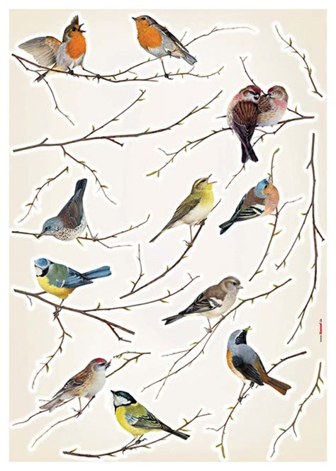 Wall Stickers Birds birds wall decals contemporary wall decals by wallpops