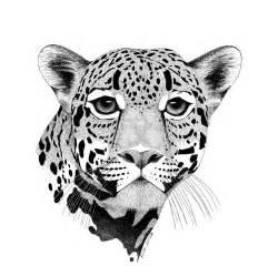 Drawings Of Jaguars Jaguar By Rick Resta