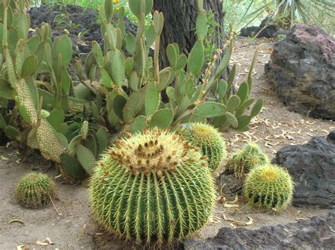 Cactus Botanical Garden 3 Day Las Vegas Grand West Skywalk Tour From Los Angeles