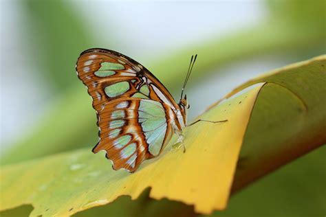 Botanischer Garten München Schmetterlinge by Sonderausstellung Tropische Schmetterlinge Botanischer Garten M 252 Nchen Xenophora