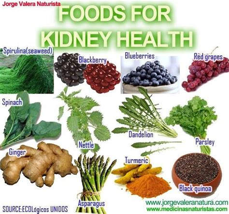 Food For Kidney Detox by Best 25 Kidney Health Ideas On Kidney Cleanse