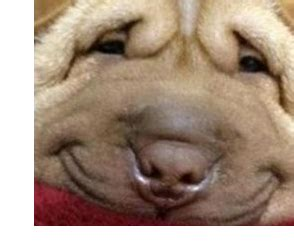 image fat dog.png | the hunger games wiki | fandom