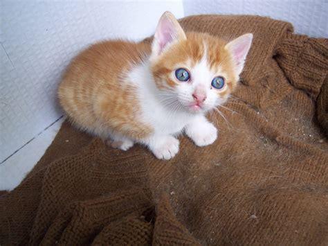 berta tiene un gatito gu 237 a de cuidados para gatitos reci 233 n nacidos hu 233 rfanos