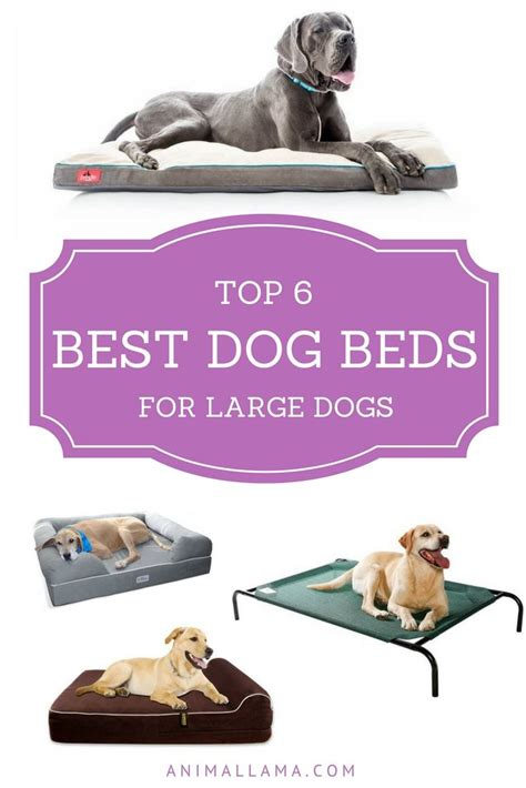 best dog bed for large dogs choose the best dog bed for large dogs and small dogs